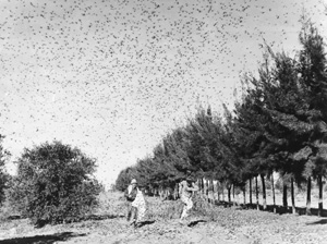 grasshoppers1939