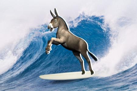 17-surfing-donkey.w710.h473